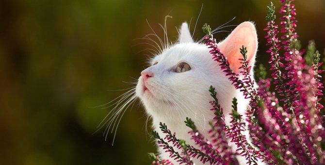 猫が亡くなったら飼い主がする4つのこと