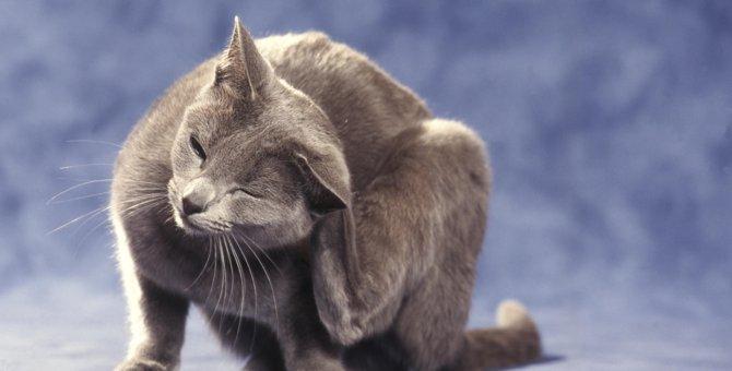 猫のフケの原因とは?可能性のある病気や日常で出来る対策