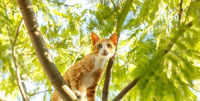 なぜ?猫が高い所から飛び降りても着地できる理由