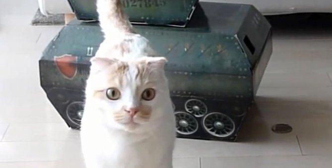 猫が操縦しているみたい!おもちゃの戦車で遊ぶ猫さん