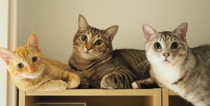 LAYLAの12猫占い【12/28~1/3】のあなたと猫ちゃんの運勢