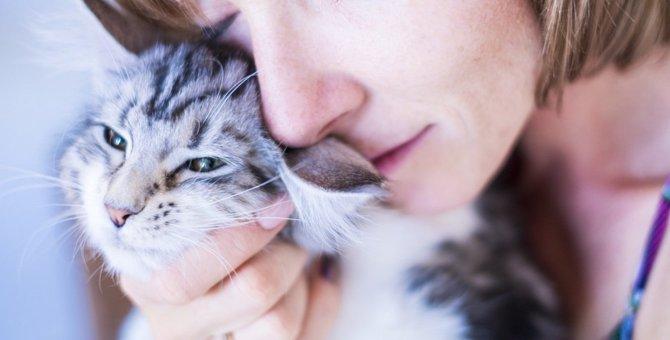 猫のシニア化。年齢以外で判断するポイント5つ