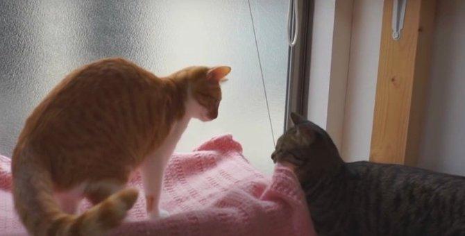 ニャンズ大喜び!窓に付けるハンモック再び♡