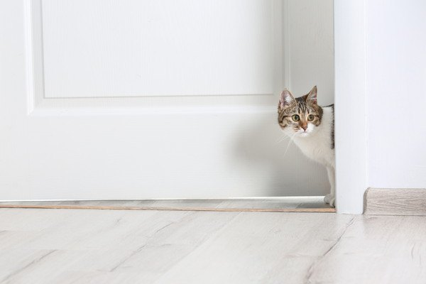 家の中で猫を立ち入らせない方がいい5つの場所