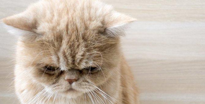 猫がストレスでなる病気6つと対処法