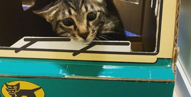 段ボール箱だけじゃない!飼い主の想像を超えてくる『猫の隠れ場所』3選