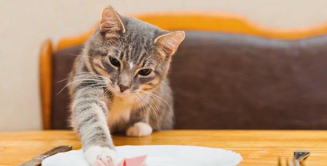 猫の食事や飲み水、我が家の工夫術をご紹介
