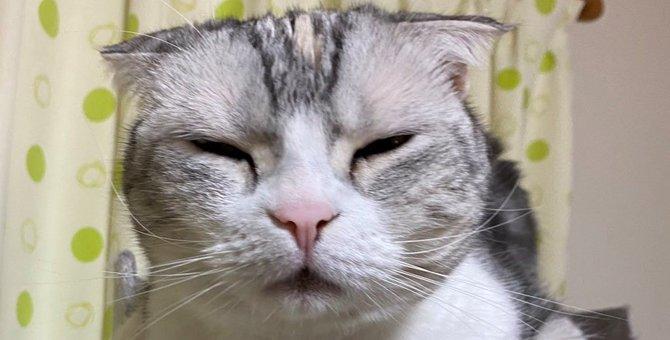 ムーンパワー!猫さんの『イリュージョン』がTwitterで話題に♡
