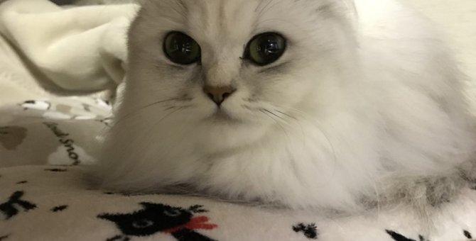 元気だからこそ動物病院へ!猫の定期健診が重要な4つの理由