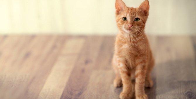 猫が飼い主の正面に座るのは?6つの心理