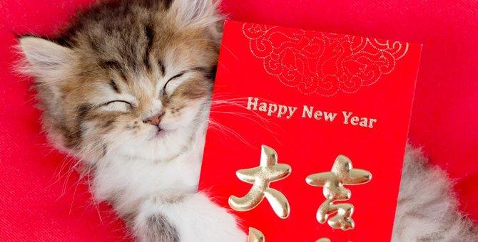【世界にゃん事情】中国・北京編の猫たち
