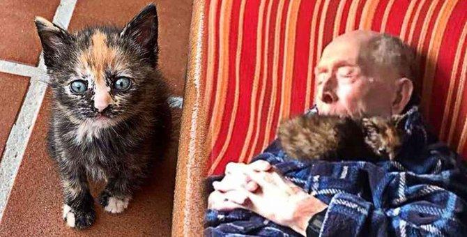 おじいちゃんと子猫が運命の出会い…ほのぼの幸せライフに釘付け♡
