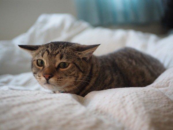 猫にとって『人間』はどういう存在なの?