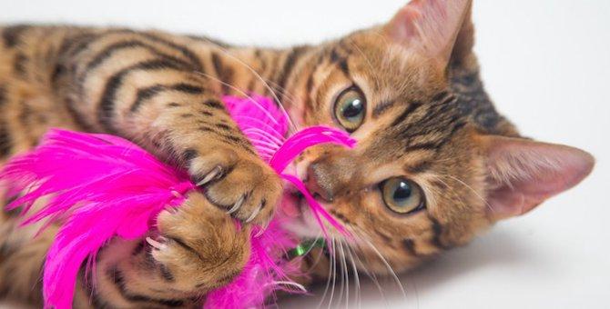 猫のおもちゃ!みんなが使ってる人気ランキング