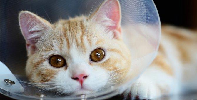 猫の『目が充血』する5つの原因と対処法