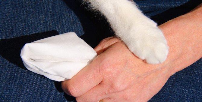 猫の死が受け止められなくて苦しい時に試して欲しい7つの事