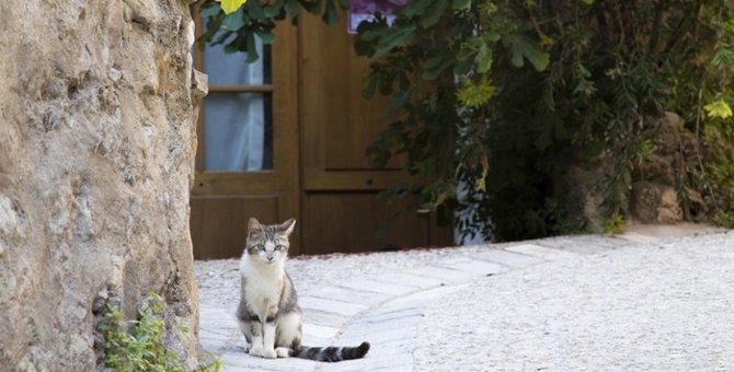 猫にまつわる外国語!名前や三毛猫、肉球の言い方