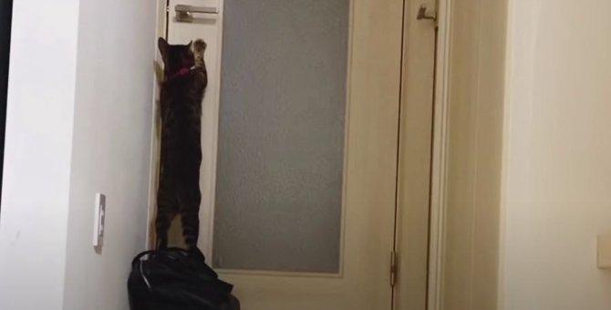 「ママさんがトイレに行っちゃった…」寂しそうな猫さん