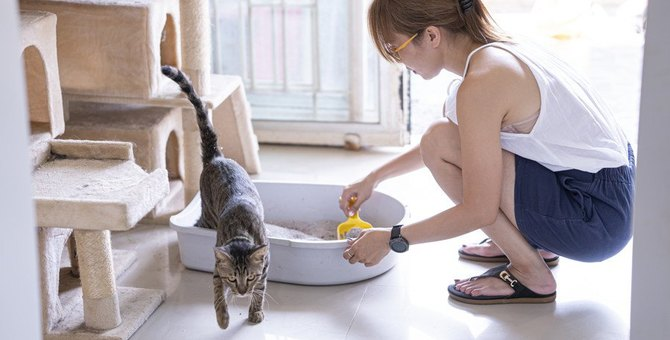 猫のトイレに猫砂は絶対必要?好みの猫砂を見つけるコツと対策