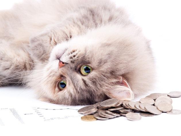 猫の病院代でかかる相場と払えない時の対処法