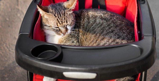 わざと?猫が乗ってはいけない物の上に乗る心理6つ
