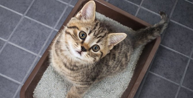 猫にとって理想的な『トイレの置き場所』5選