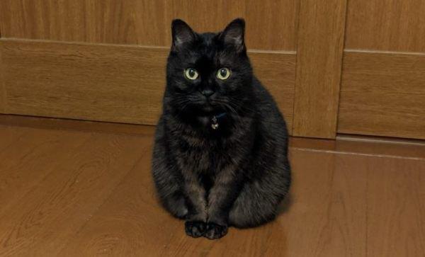 瀕死の子猫…愛情をもらい世話好きの可愛いレディに成長!