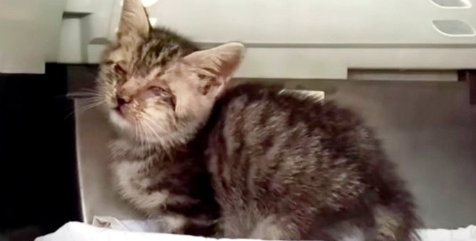 目も鼻もふさがった子猫…手厚いケアで立派な家猫へ!