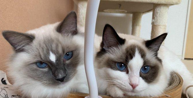 猫が『好きと伝えたい』時にする仕草5選