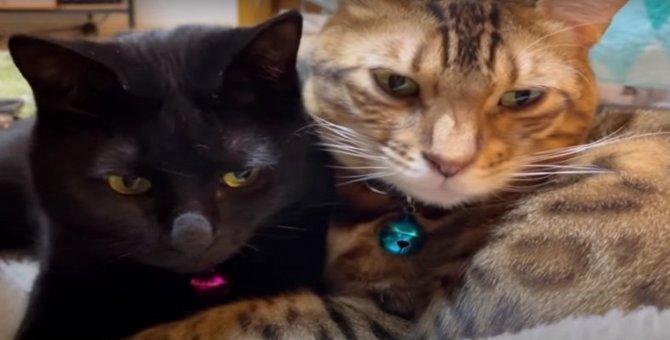 黒猫さんの片思いが成就!?大好きな猫さんにピッタリ寄り添う♡