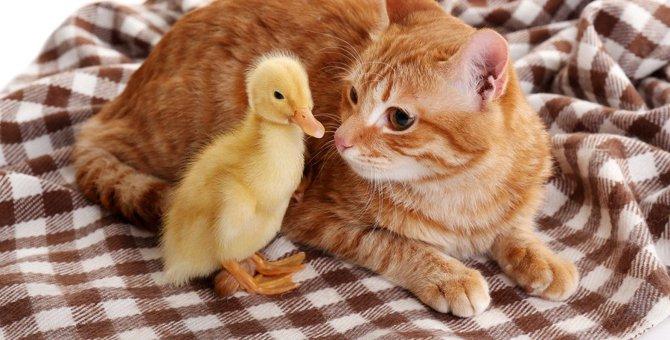 猫が自分と違う動物の世話をするのはなぜ?優しい猫様のお気持ち