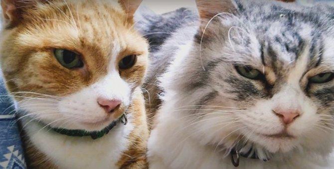 姫猫さんに尽くす優しい猫くんが愛らしい♡