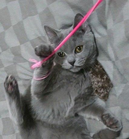 愛猫の好みはどんな遊び?喜ぶおもちゃタイプ4選
