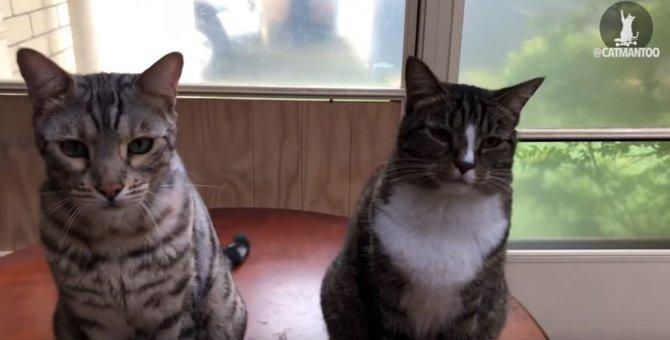 猫1「やったのはコイツです」猫2「裏切りものー!」 の一部始終