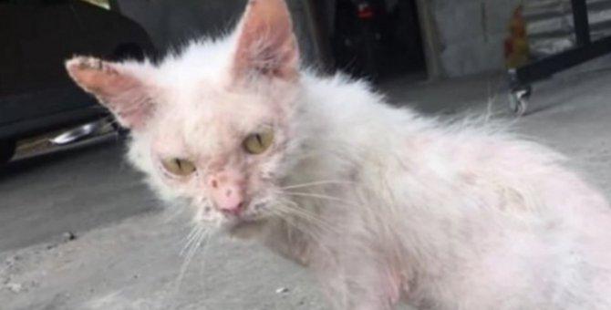 骨と皮だけの痩せた子猫…保護され輝く美猫になった姿に感動!