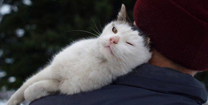 猫が苦手な人が怖いと感じるしぐさ3つ