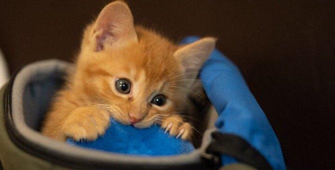 猫が本気で噛んでくる時の心理5つ