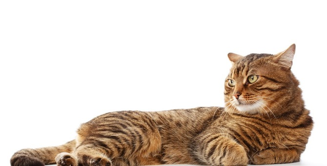 猫が暴れる2つの原因と落ち着かせる2つの対策