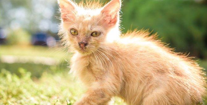 猫伝染性腹膜炎(FIP)について 感染経路や症状の治療法