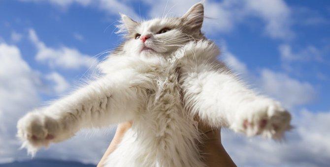 猫は幸福を呼ぶ!?幸せを運ぶ猫の特徴