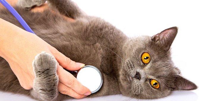 猫を去勢する費用と手術における注意点