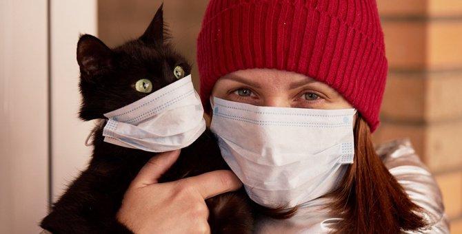 【猫飼いのみなさんへ】万が一の新型コロナ感染に必須の備えをチェック