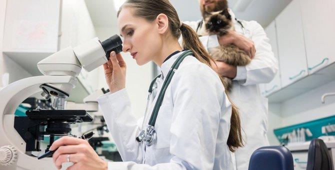 腎臓病になりやすい猫種が最新の研究で明らかに『早期発見』のためにできる事とは?