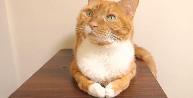 拝んでる!?おててを合わせたポーズが可愛い猫さん♡