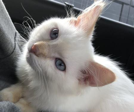 ほかの猫と浮気したら飼い猫にバレる?
