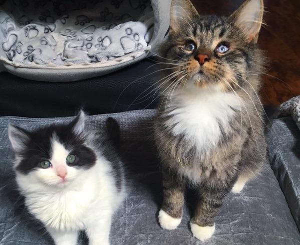 感染症で視力を失ってしまった猫と同様の境遇の子猫との運命の出会い