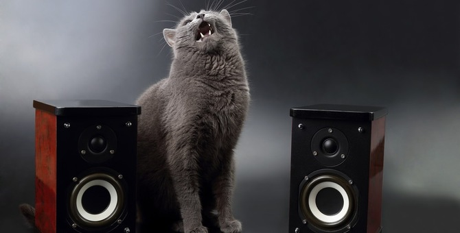 猫が好きな音、嫌いな音にはどんな物がある?