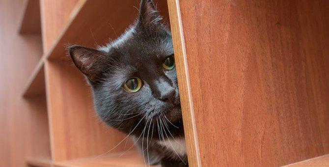 甘え下手な猫の心を開く!7つの方法