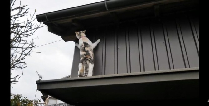 庇をぴょん!予定通りにはいかない猫ちゃんの散歩