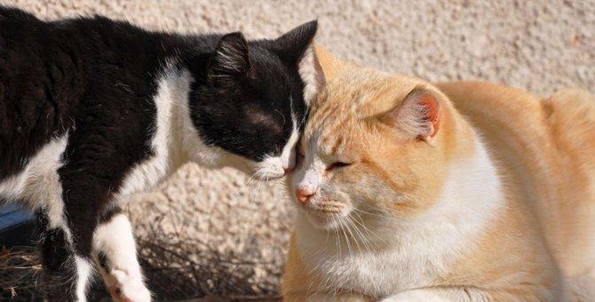 猫が頭突きをしてくる理由と愛情表現